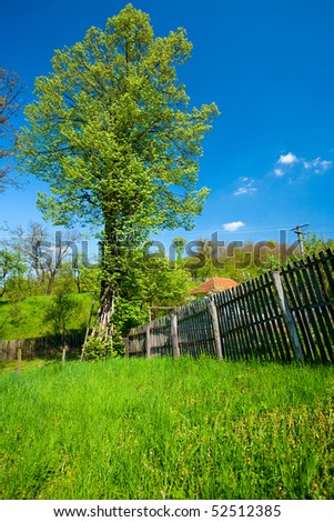 Rural landscape with a linden tree and a fence - stock photo