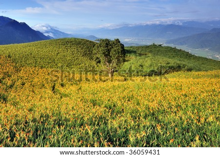 rural landscape with big tree in day-lily field - stock photo