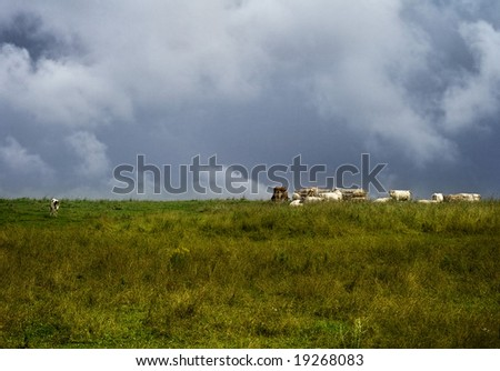 rural landscape with cloudy sky and cows - stock photo