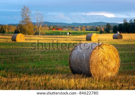 Rural landscape with hay bale in foreground and cows in background - stock photo