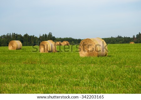 Rural landscape with haystacks in rolls on a green field - stock photo