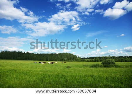 Rural landscape with herd of cows. - stock photo