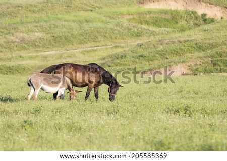 Rural landscape with horse and donkey