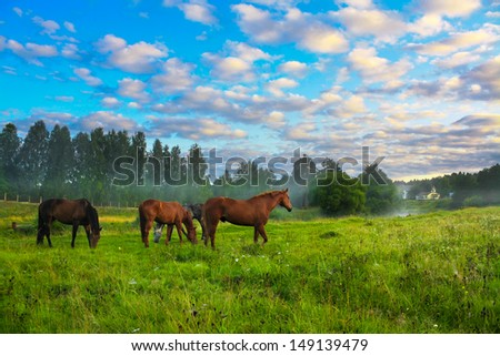 rural landscape with horses being grazed on a pasture  - stock photo