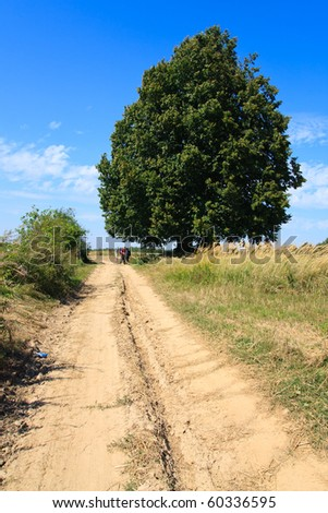 Rural landscape with lonely large tree and dirt road in fields - stock photo