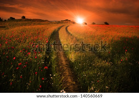 Rural landscape with lots of red poppies in sunset with ray of sunshine. - stock photo