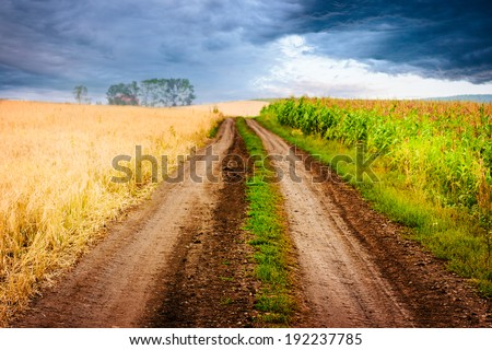 Rural landscape with road between two fields: corn and oat. Stormy sky. Shallow depth of field. - stock photo
