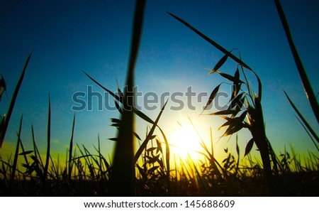 Rural landscape with wheat field on sunset - stock photo