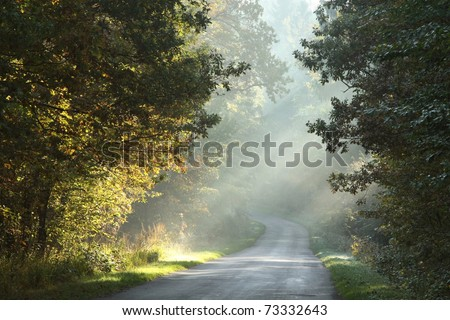 Rural lane running through the deciduous forest on a foggy morning. - stock photo