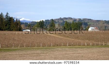 Rural Oregon raspberry field farms. - stock photo