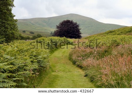 Rural path in the Scottish Borders, UK - stock photo