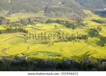 Rural  rape flower landscape in yunnan province, china