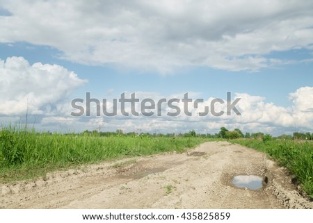 rural road and fields with dandelions in warm summer day - stock photo