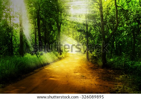 rural road and green forest with ray light in dramatic tone - stock photo
