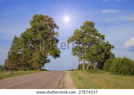 Rural road between two trees in a sunny day - stock photo