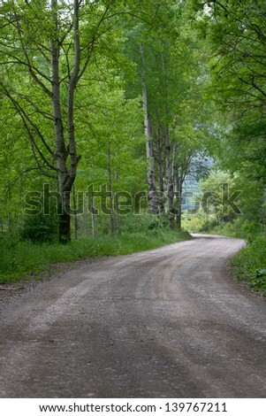 Rural road Country road, green trees and forest nature