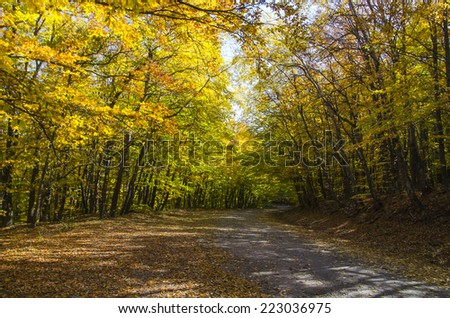 rural road in autumn forest - stock photo
