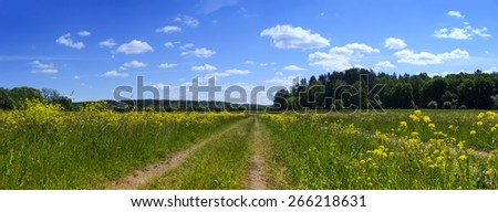 Rural road in village field with yellow flowers near forest under blue sky and white clouds in summer sunny day - country landscape panorama  - stock photo