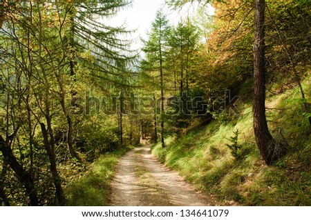 Rural road leading through autumn forest - stock photo