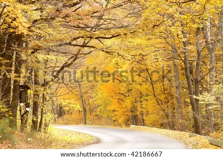 Rural road leading through the forest in autumn colors.