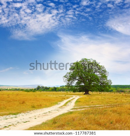 Rural road leading to a lonely oak tree in Autumn - stock photo