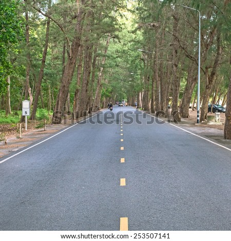 Rural road lined with pine trees. - stock photo