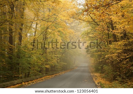 Rural road running along the maple trees on a foggy autumn morning. - stock photo