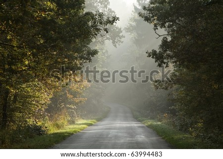 Rural road running through a misty autumn forest in the early morning. - stock photo