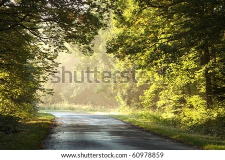 Rural road through an enchanted forest on a foggy late summer morning. - stock photo