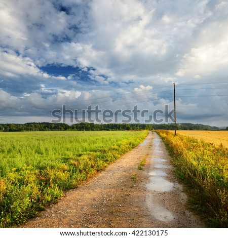 Rural road through green agricultural fields after summer rain