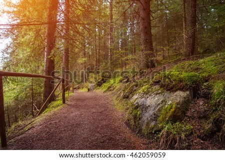 rural road through the deep green forest. natural summer background