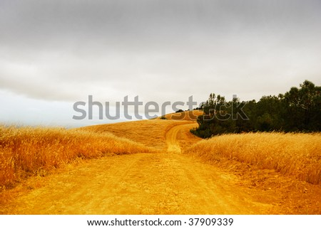 Rural road with dry grass on the sides disappearing into the stormy sky.