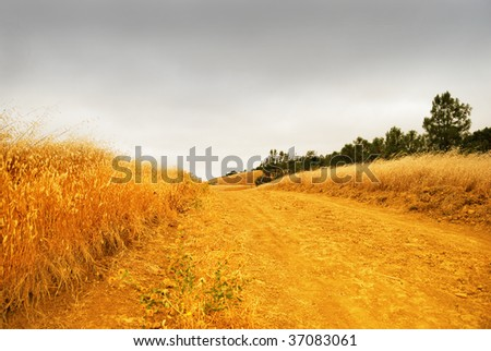 Rural road with dry grass on the sides dissappearing into the stormy sky. - stock photo