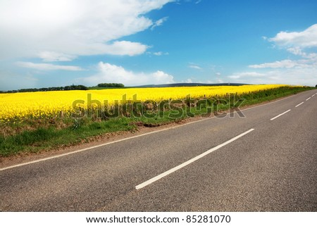 Rural road with fields of canola - stock photo