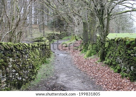 Rural road with trees and moss stones wall - stock photo