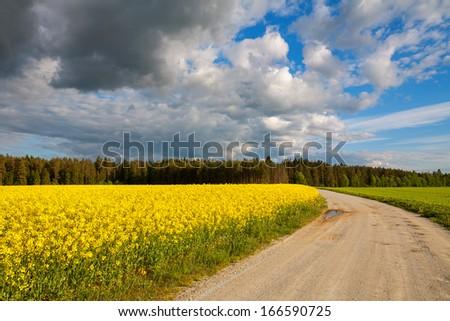 Rural road with yellow flowering rapeseed field. Estonia, Europe - stock photo