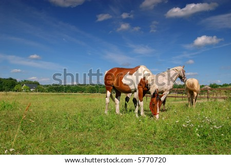 Rural scene in belgium,  horses grazing in the meadow on a sunny summer day. Agriculture concept.