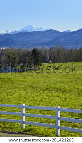 Rural scenery in early spring time with mounting background. Cow's pasture with white fence in front. Fraser Valley, British Columbia, Canada. - stock photo