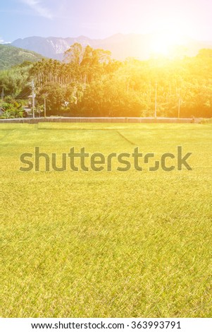 Rural scenery with golden paddy rice farm in Hualien, Taiwan, Asia. - stock photo