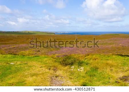 Rural scottish panorama. Erica arborea  meadows. Travel destinations - stock photo