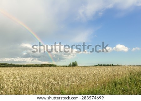Rural summer landscape with rainbow, cumulus clouds and cereal rye farm field