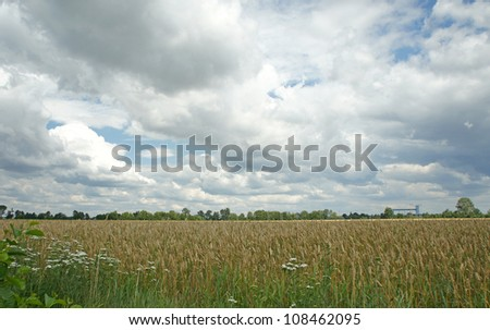rural view, and corn field - stock photo