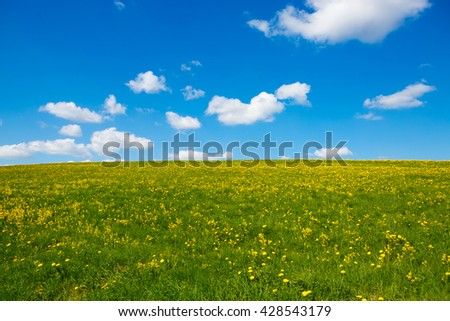 Rural views to the flower meadow and blue sky. Field with yellow dandelions to the horizon. Pastoral panorama of nature summer. Beautiful landscape of a Sunny day.  - stock photo