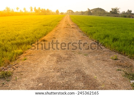 Rural way in Thailand during sunset. - stock photo