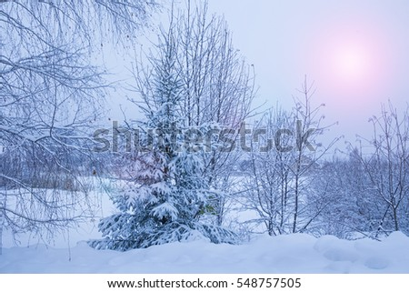 rural winter landscape with snowdrifts and snow-covered trees
