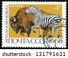 RUSSIA - CIRCA 1968: post stamp printed in USSR (soviet union) shows american bison or buffalo and zebra from askania nova and astrakhan state reservations, Scott catalog 3517 A1689 4k, circa 1968 - stock photo