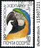 RUSSIA - CIRCA 1984: stamp printed by Russia, shows bird parrot circa 1984 - stock photo