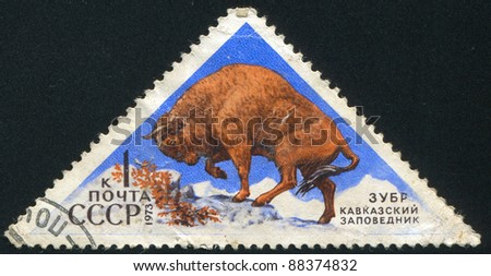 RUSSIA - CIRCA 1973: stamp printed by Russia, shows European Bison, circa 1973 - stock photo