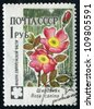 RUSSIA - CIRCA 1960: stamp printed by Russia, shows flowers Rose hip, circa 1960 - stock photo