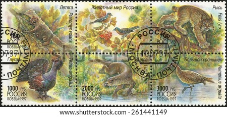 RUSSIA - CIRCA 1997: stamp printed by Russia, shows The animal world of Russia, circa 1997 - stock photo